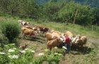 30. Na kmetiji pod Lisco – jinij, 2019