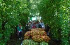 Obisk kmetije Mižigoj